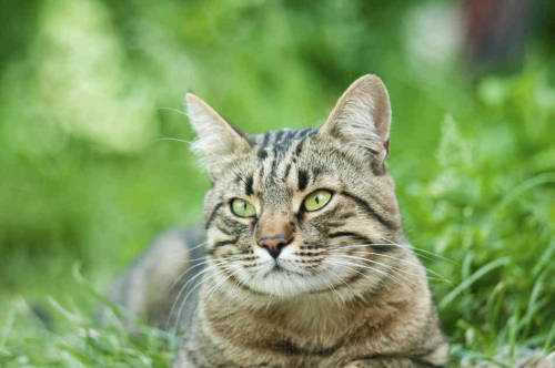 "Cat lovers: PETA says Florida's feral cats are better DEAD than FED. As shelters and health departments nationwide embrace trap-neuter-release programs, PETA remains a stalwart opponent of this humane alternative to killing, arguing that healthy feral cats should continue to be killed.Now, PETA is fighting legislation that would clarify that TNR is not illegal in Florida. According to PETA, ""Senate Bill 1320 (S.B. 1320)—and its companion bill in the House (H.B. 1121)—would essentially strip cats of existing legal protections by allowing humans who starve, neglect, and harm them to avoid criminal prosecution for cruelty to animals."" This is fear mongering at its worst. Today, feral cats are slaughtered in shelters. SB 1320/HB 1121 will allow them to be neutered and released to their habitats. Here's the bill: http://flsenate.gov/Session/Bill/2013/1320/BillText/Filed/PDFSend polite emails asking for a YES vote on SB 1320 scheduled for April 1: bullard.larcenia.web@flsenate.gov, flores.anitere.web@flsenate.gov, galvano.bill.web@flsenate.gov, garcia.rene.web@flsenate.gov, montford.bill.web@flsenate.gov, sachs.maria.web@flsenate.govPlease also call the committee's main line at 850-487-5133 to express your SUPPORT for S.B. 1320."