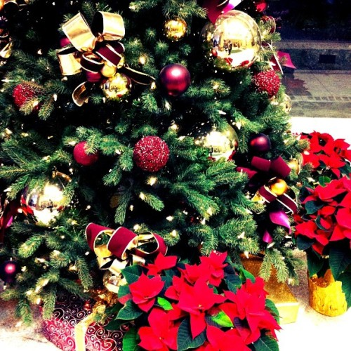 My Dream Tree 🎄#christmas #tree #decoration #plant #present #ornaments #dream #perfect #gold #tistheseason #beautiful #instagood #instalove #instadaily #igers #igaddict #december #amazing #beauty #love #fav #holly #red #seasonal #holiday #festive
