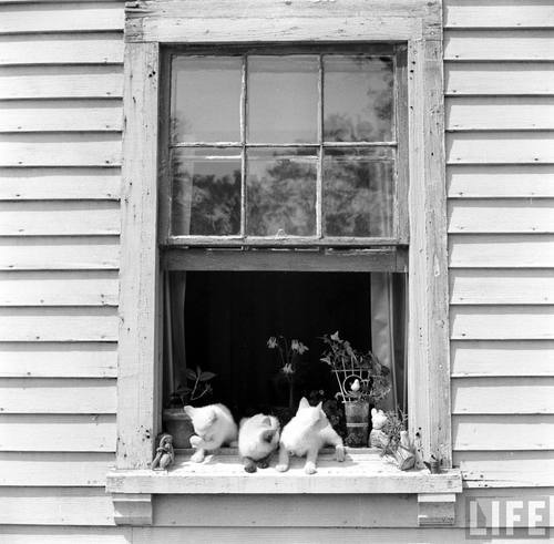 oldtimeycats:   Photograph by Yale Joel, 1950 Source: LIFE Photo Archive, hosted by Google.