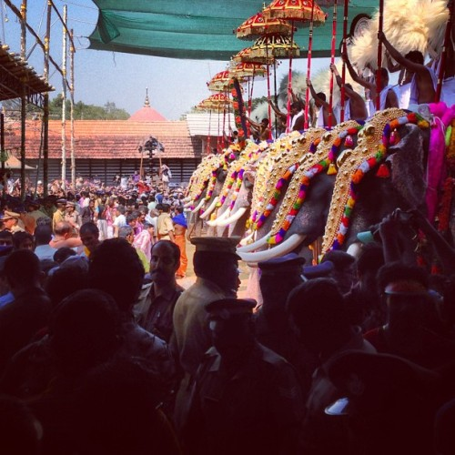 kishorenkumar:  Here in Kerala, when we say festival we mean business. and elephants. and a lot of gold. and crowd. and..