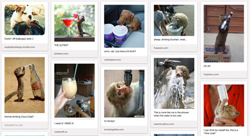 New PubLIZity Pinterest Board: Cute Animals Drinking Drinks Like People
