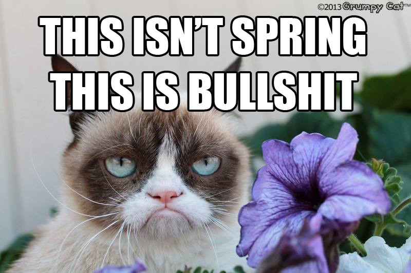Grumpy Cat and I are not happy with the weather in New York this season.