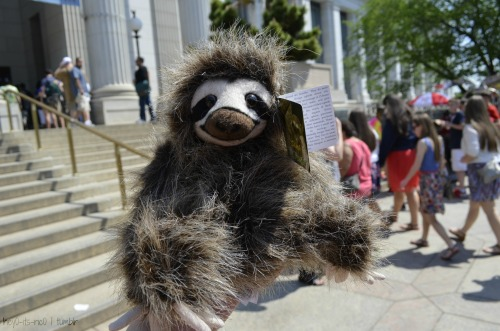nerdy-b0y:  hey0-its-ric0:  sloth woo  MY SLOTH! hehe