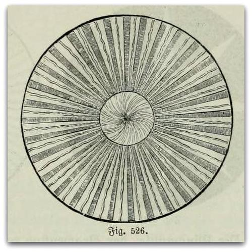 Fig. 526. - Mandala  View Post
