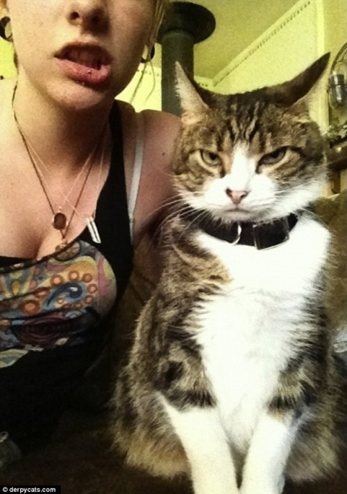 Not ready for their close-ups: The hilarious cats that do NOT want to be in your picture They say a picture is worth a thousand words. But in the case of a these cats caught off guard before the camera, a thousand words describing their horrified expressions may not even begin to cover it. Compiled by Buzzfeed.