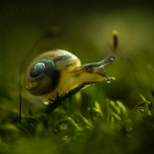 lavenderexistence:  (Little Snail. III by Somebody—else)