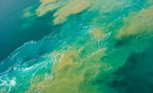 Toxic Oceans Delayed Spread Complex LifeA new model suggests that inhospitable hydrodgen-sulphide rich waters could have delayed the spread of complex life forms in ancient oceans.The research, published in the journal Nature Communications, considers the composition of the oceans 550-700 million years ago and shows that oxygen-poor toxic conditions, which may have delayed the establishment of complex life, were controlled by the biological availability of nitrogen.Read more: http://www.laboratoryequipment.com/news/2013/03/toxic-oceans-delayed-spread-complex-life