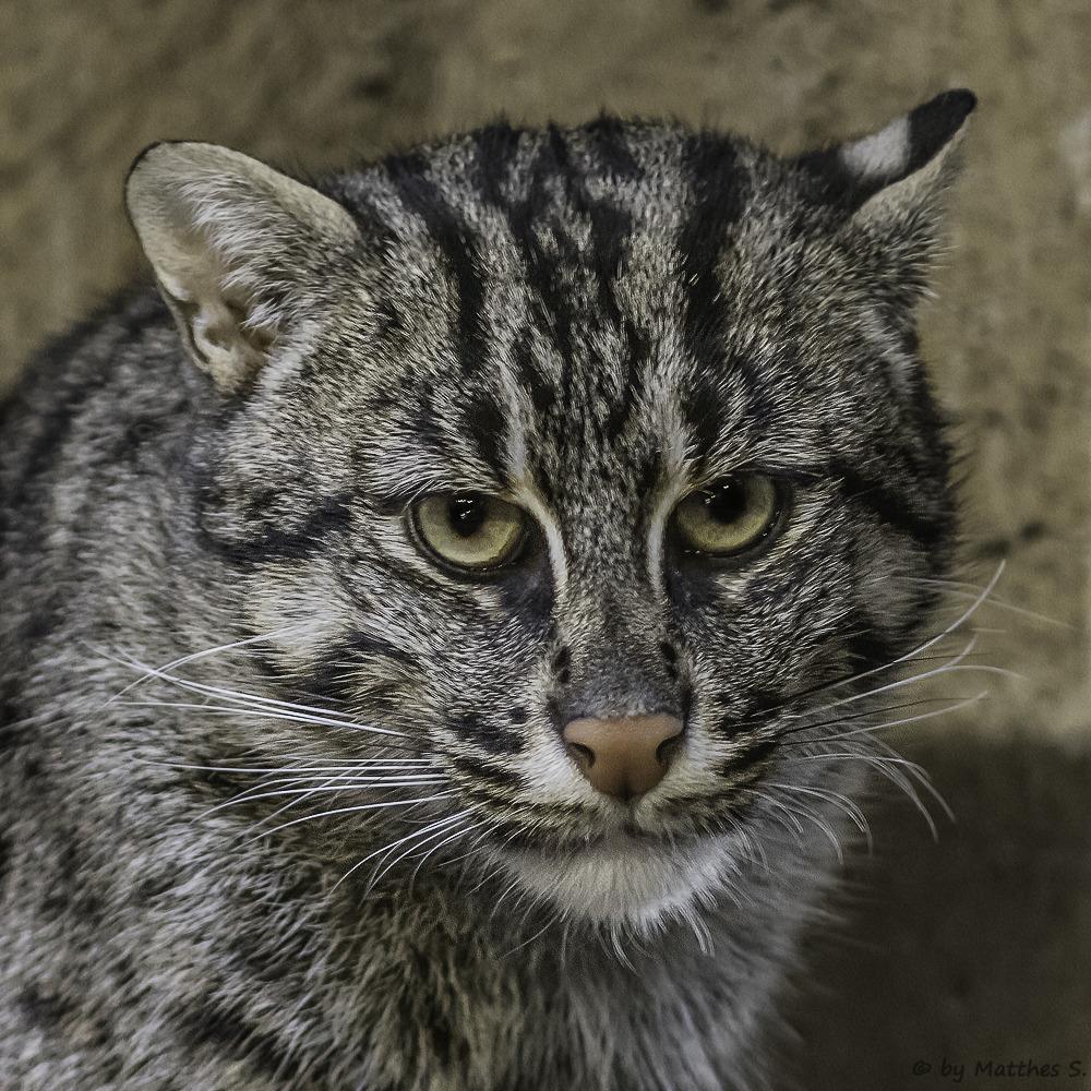 #fishing cats#cute cats#pets#animals