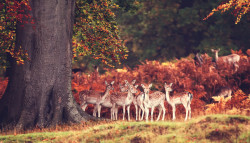 "magicalnaturetour:  ""Gaggle of girls"" by Mark Bridger"