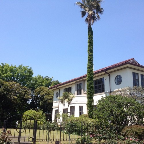 #fine #blue #sky #modern #house #yokohama #yamate #peace  #palm #tree #beatiful
