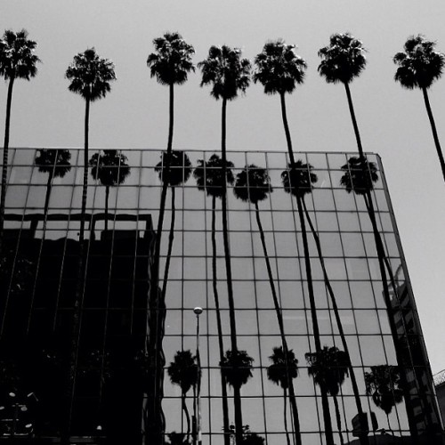 #blackandwhite #bandw #bw #palm #trees #in #a #row #losangeles #aliens