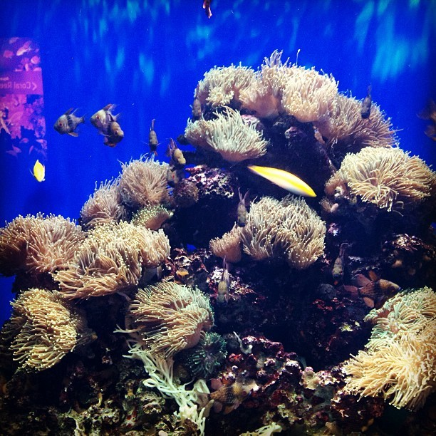 #coral #fish #pretty #colours  #water #londonzoo #aquarium #art