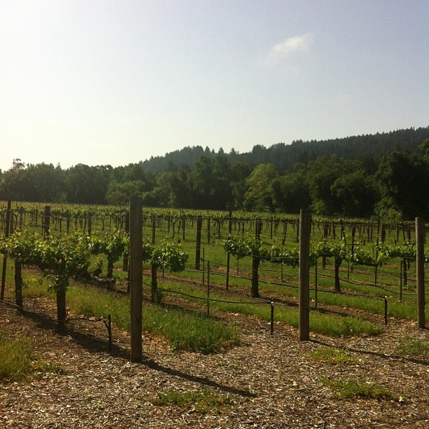 Rise and shine in wine country.