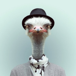 thekhooll:  Mr Ostrich Zoo Portraits is an creative project by Spanish photographer Yago Partal who did the experiment and captured the funny pictures of animals with sweater, shirt, etc.