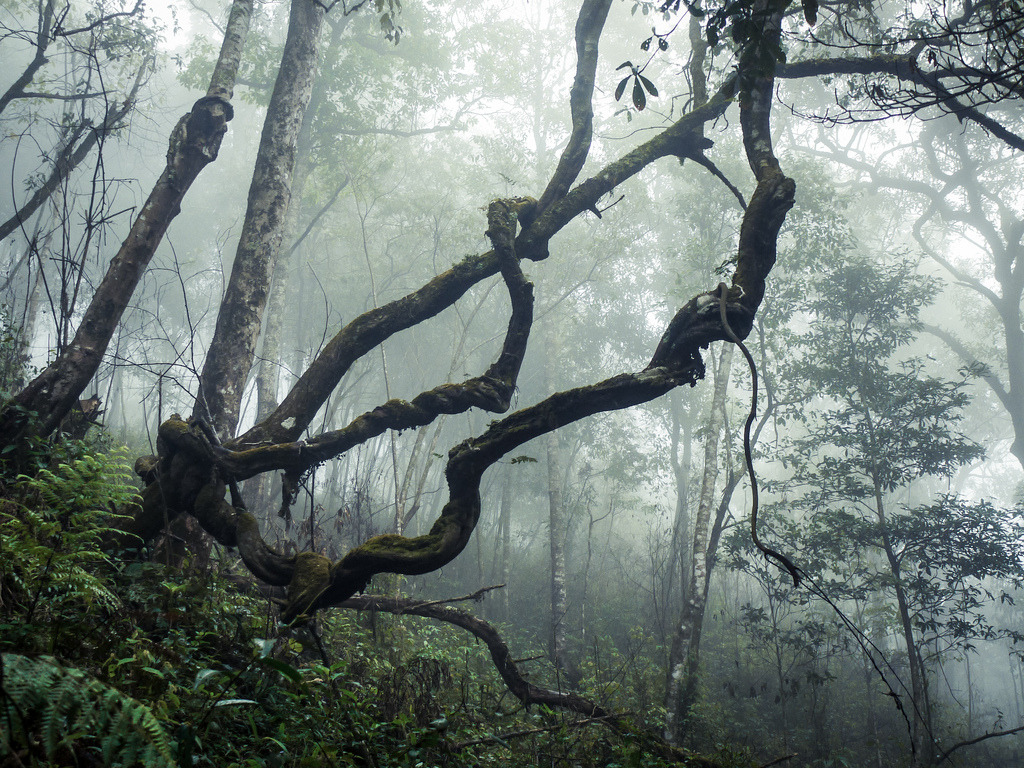 darkface:  Forest in the Lao Highlands (by daniel.frauchiger)