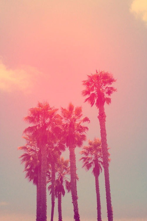 aloelita:  inspirationarea:  pink Summer | via Tumblr en We Heart It. http://weheartit.com/entry/62109451/via/_rihannalover_  rosy!
