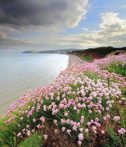 Flowers in Dawlish, Devon, England  Photo by James Anderson