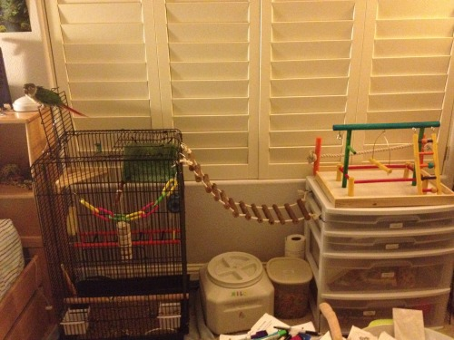 "the-vegan-muser:  So Milo has his own section of my bedroom that probably takes up a whole 1/8th of the room, but even though he has tons of awesome toys and stuff that other birds can only dream of, he's just like ""thanks but no thanks, I'll just stick to perching on my cage door and ignoring all of the awesome stuff you buy me.""   My bird…  Exact same way."