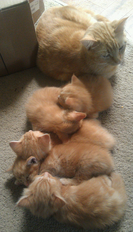 starline:   llbwwb:  Todays Cuteness:) The lineup (by Understated Flea)  D'awww!