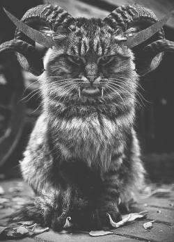 cat Black and White weird horror cats gato Demon rude blanco y negro