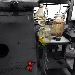 prenquin:  #plants #machines #butterflies #glass #industrial