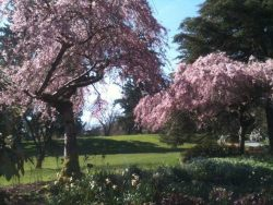 VanDusen Botanical Gardens - Vancouver this week! Blossoms are out!