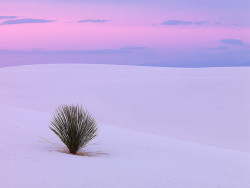Pink Sky At White Sands by Ben  H. on Flickr.