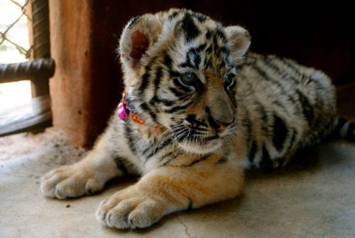 theanimalblog:  by: Devanshi