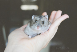 closings:  hi my little hamster :3 by JeyPhotography.© on Flickr.