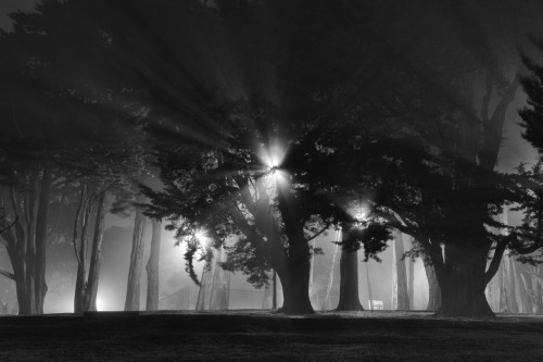 nickbilton:  The trees in the San Francisco Fog last night.