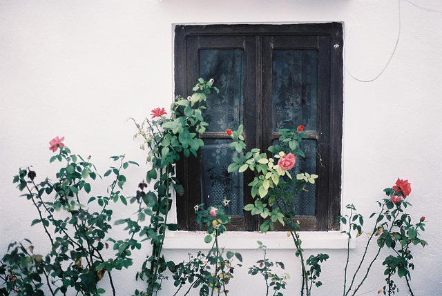 • by Joana Rosa Bragança on Flickr.