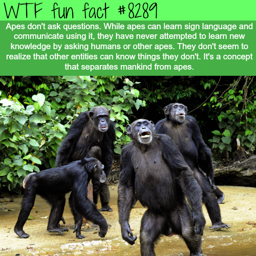 concept facts mankind apes question