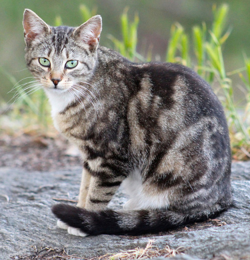 adulthoodisokay:  Photographer  Harry Shuldman documents the  feral cats of NYC's Morningside Park.