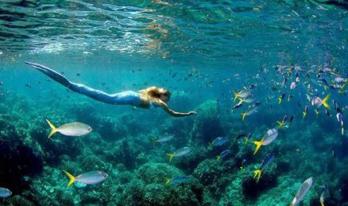 (via Daily Express: Real-life mermaid with a £10,000 tail she uses to swim with sharks) All I can say is, of course this girl and her tail are from LA!! It may also be worth noting that, contrary to the headline, she is not actually a 'real life' mermaid - I'd say she is more like a Hollywood fantasy. Well, at least she is promoting ocean conservation!