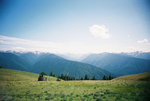 arquerio:  hurricane ridge by ponycutter(loyalmountains) on Flickr.