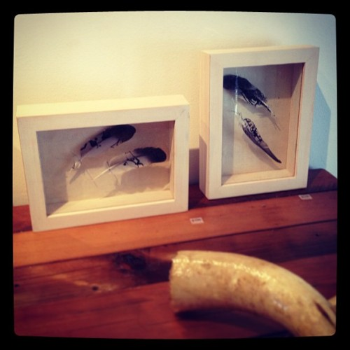 A couple new additions featured in Saturdays photo-shoot! ink on feathers pinned in handmade box frames 