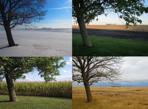 I love photographing my Dad's farm in Iowa, to capture both my nostalgia of growing up there as well as to show off its beauty. Two years ago I took a random photo through an old hackberry tree on the back of the property from the north side to the south place (where my father was born).  Over the next two years, I returned to the same spot each season to get different points of view. I gathered 24 shots in all.