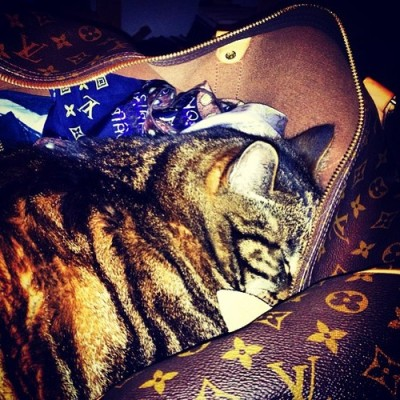 #fatcat #louisvuittonbags #richcatsofinstagram  by macieksputo