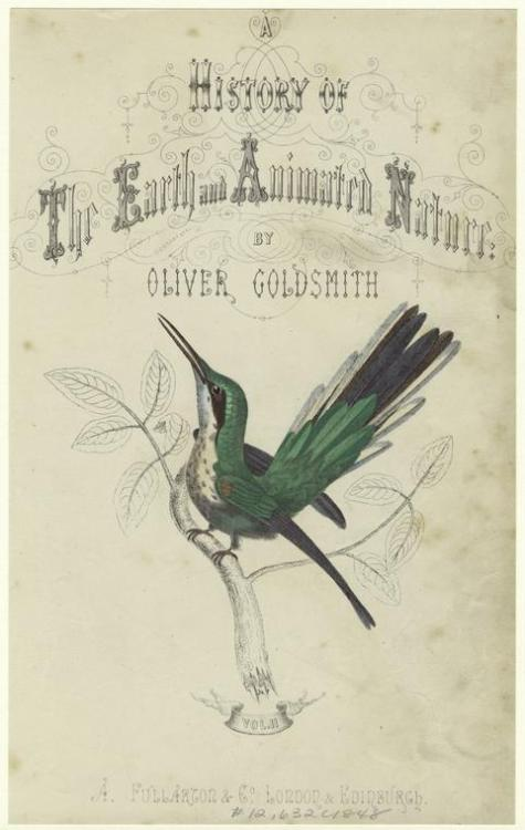 compendium-of-beasts:  [Title page depicting hummingbird perched on a branch.] (1848)  From A history of the earth and animated nature : with an introductory view of the animal kingdom. Fullarton, 1848) Goldsmith, Oliver via NYPL