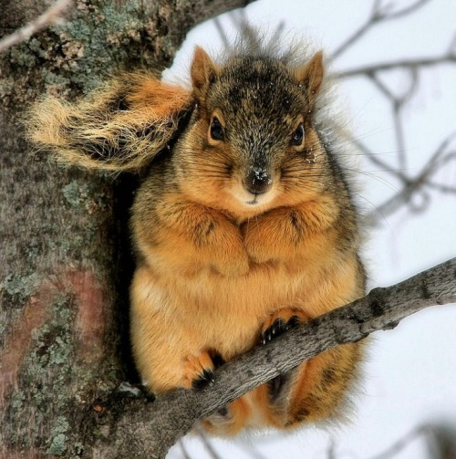 elfentau:  ~* Squirell * Observing the movement! *~
