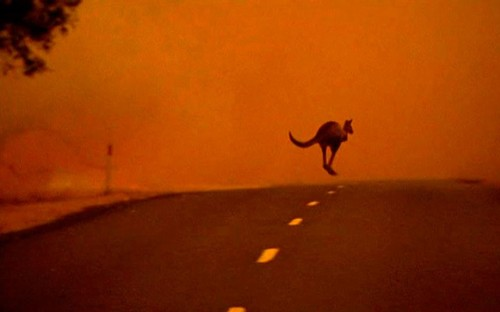 inothernews:  A kangaroo flees across a road from a bushfire in south-eastern Victoria state, Australia.  Record high temperatures continue to affect parts of the country.  (Photo: Australian Broadcasting Corporation via Reuters / The Telegraph)