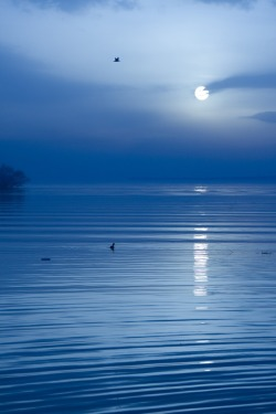 unwrittennature:  Moonlight Sonata by: Kaan Köse