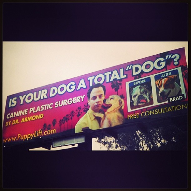 "comedycentral:  Is your dog a total ""dog""? Dr. Armond is here for you! Go to http://PuppyLift.com for a free consultation."