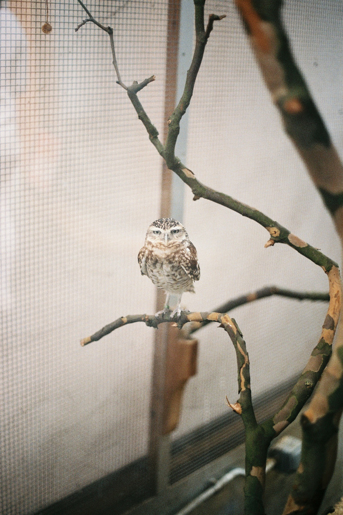 8birds:  Chouette - London Zoo (by Melchior Tersen)