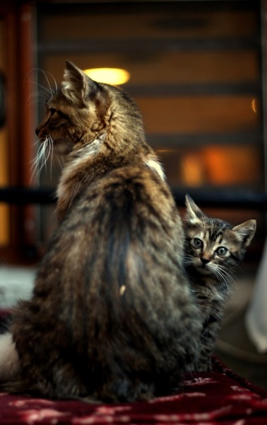 theanimalblog:  Cats. Photo by Emre Can Gunel