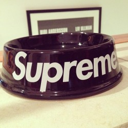 dpryde:  Dog bowl steelo