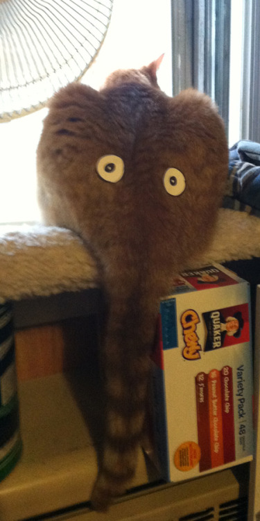 thingstuffplace:  Fun with cat butts.