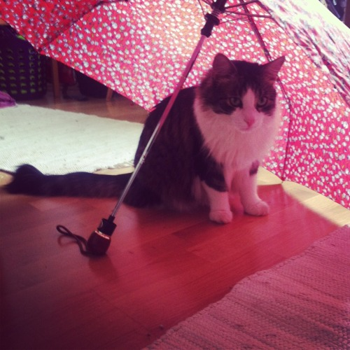 under my umbrella.