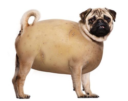 dennys mashed potato pugtato pug thanksgiving lol