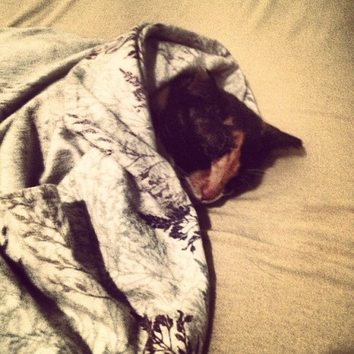 almostbakedd:  Well aren't we cozy… #sleep #kitty